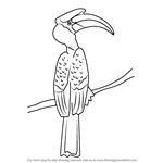 How to Draw a Great Hornbill