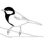 How to Draw a Great Tit