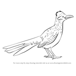 How to Draw a Greater Roadrunner