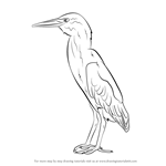 How to Draw a Green Heron
