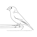 How to Draw a Greenfinch