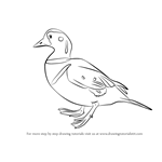 How to Draw a Harlequin Duck