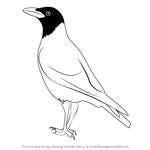 How to Draw a Hooded Crow