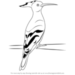 How to Draw a Hoopoe