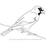 How to Draw a House Sparrow
