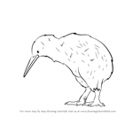 How to Draw a Kiwi