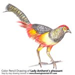 How to Draw a Lady Amherst's Pheasant
