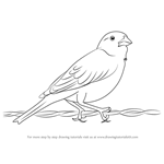 How to Draw a Lark Bunting