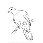 How to Draw a Laughing Dove