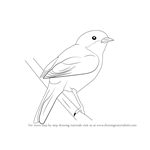 How to Draw a Lesser Whitethroat