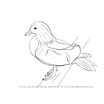 How to Draw a Mandarin