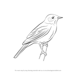 How to Draw a Nightingale