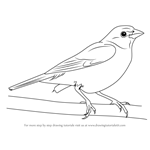 How to Draw a Painted Bunting