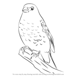 How to Draw a Pine Grosbeak