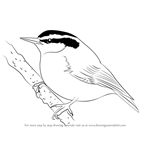 How to Draw a Red-Breasted Nuthatch