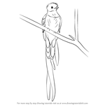 How to Draw a Resplendent Quetzal