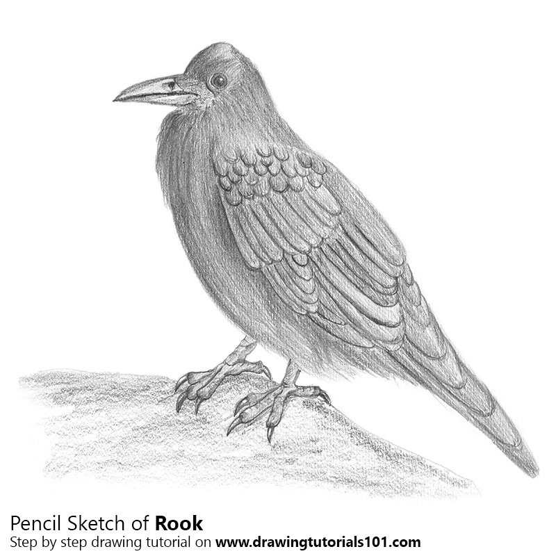 Pencil Sketch of Rook with Pencils - Pencil Drawing