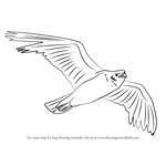 How to Draw a Seagull Flying