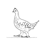 How to Draw a Sharp-Tailed Grouse