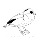 How to Draw a Smew