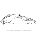 How to Draw Sparrow Feeding Young One