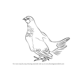 How to Draw a Spruce Grouse