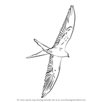 How to Draw a Swallow-Tailed Kite