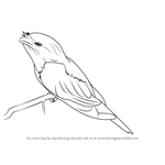 How to Draw a Tawny Frogmouth