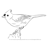How to Draw a Tufted Titmouse