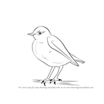 How to Draw a Wheatear