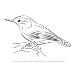 How to Draw a White-Breasted Nuthatch