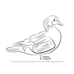 How to Draw a Wood Duck