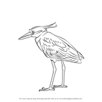 How to Draw a Yellow-Crowned Night Heron