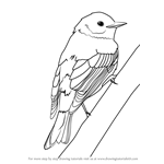 How to Draw a Yellow-rumped Warbler