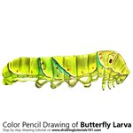 How to Draw a Butterfly Larva