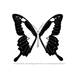 How to Draw a Papilio Butterfly
