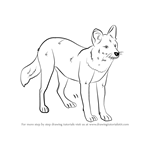 How to Draw a Dhole