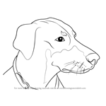 How to Draw Doberman Face