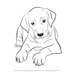 How to Draw Doberman Puppy