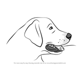 How to Draw Golden Retriever Head