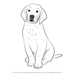 How to Draw Golden Retriever Puppy