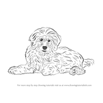 How to Draw a Goldendoodle