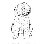 How to Draw a Mini Goldendoodle