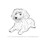How to Draw a Schnoodle