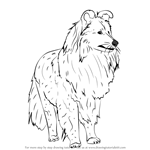 How to Draw a Shetland Sheepdog
