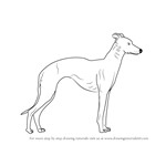 How to Draw a Whippet