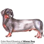 How to Draw a Wiener Dog