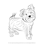 How to Draw a Yorkie Dog