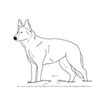 How to Draw German Shepherd Dog