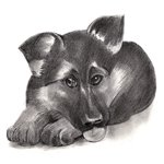 How to Draw German Shepherd Puppy